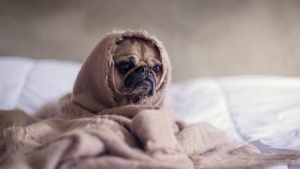 que sabanas son las mejores para dormir en invierno